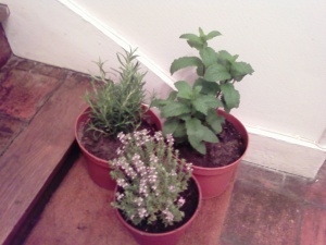 My herb plants
